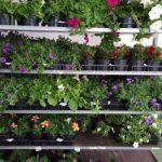Razširjena ponudba v našem rastlinjaku